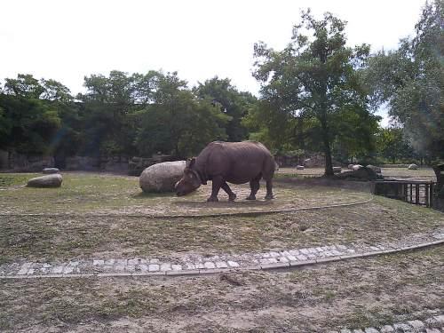 Tierparklauf